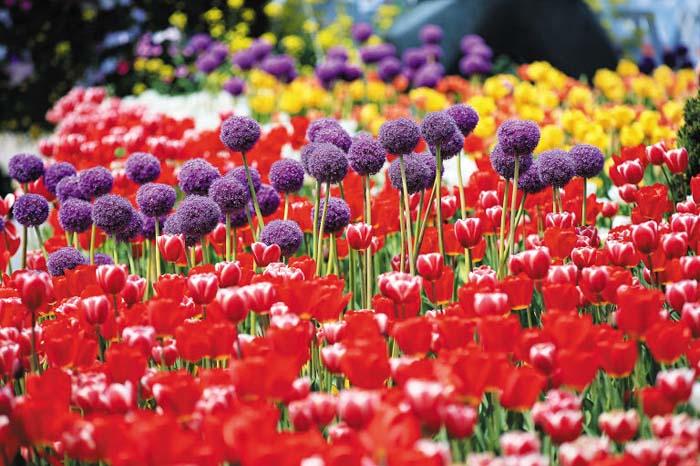 цветочная ярмарка.jpg