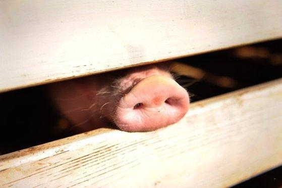 свинина.jpg