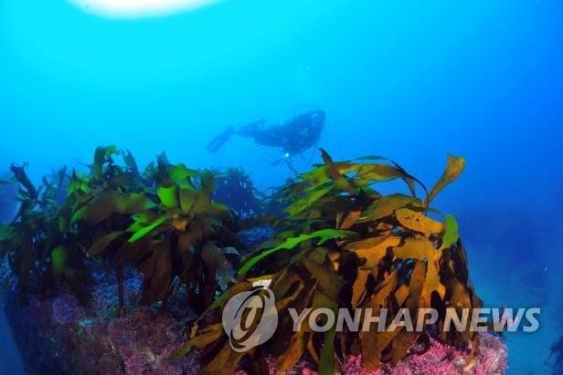 подводные леса.jpg